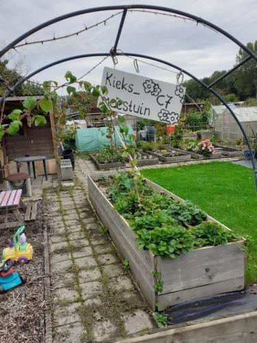 Mooie tuin het verhoogde bedden.