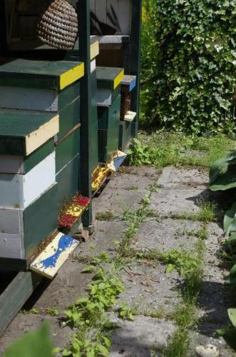 enkele bijenkasten